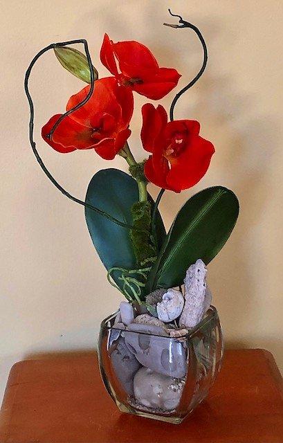 Orange/Red Phalaenpsis orchid